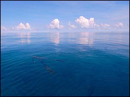 Jamie Rutana over reef