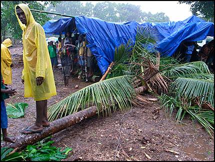 Palm and tarp