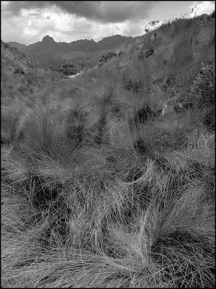 Cajas landscape